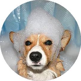 The Doggie Lodge   Pet Services